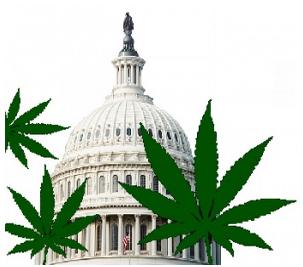 Washington_DC_Medical_Marijuana_Laws