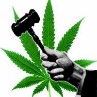 5260-judgemarijuana