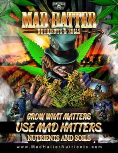 cannabis-soil-nutrients-and-soils-from-homestead-mad-hatter-74989f4c-large